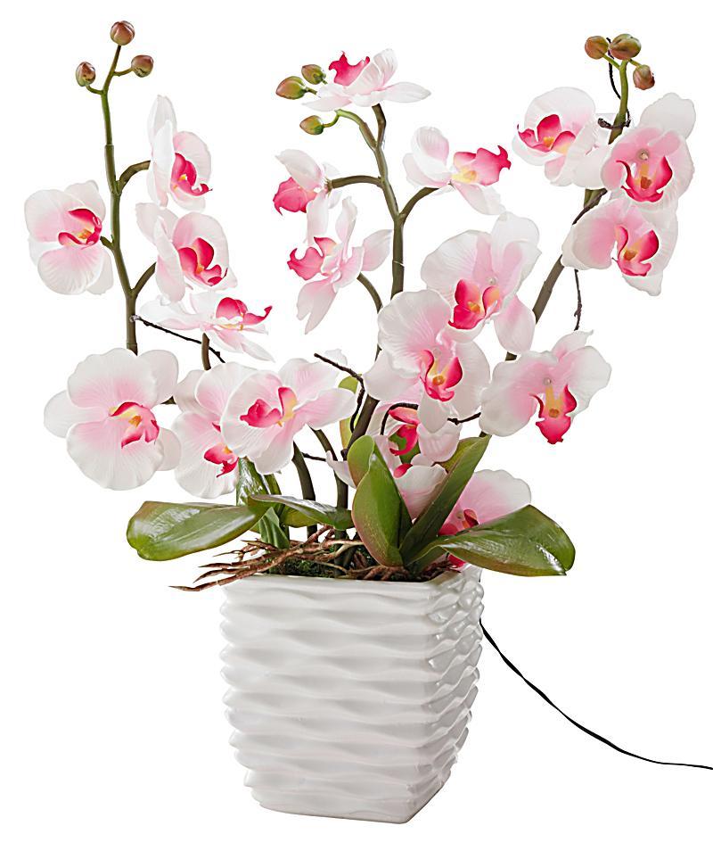 Led Beleuchtung Orchideen : Redirecting to artikeldekotrendsdekoorchideemitleds174852431