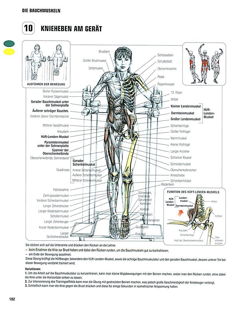 Ungewöhnlich Krafttraining Anatomie Poster Ideen - Anatomie Ideen ...