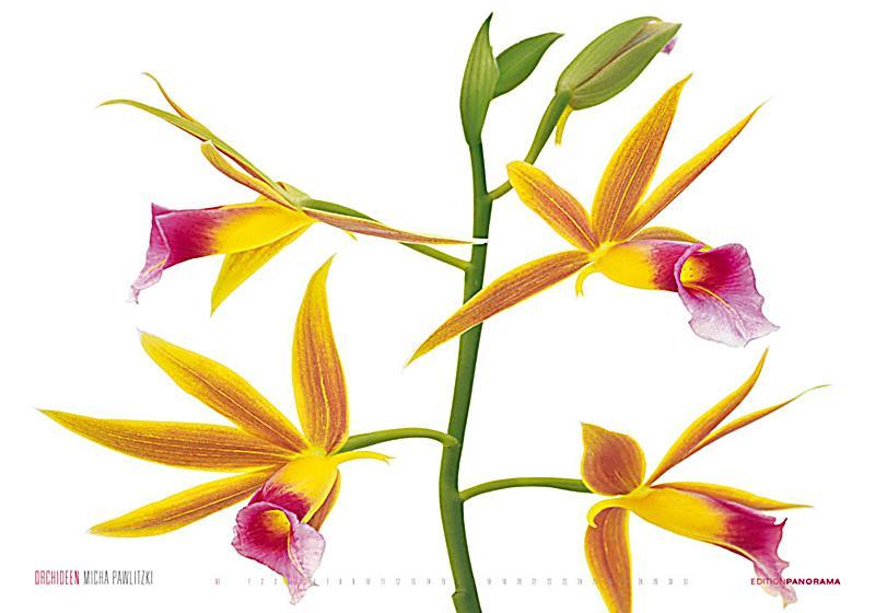 redirecting to artikel kalender orchideen 17243816 1. Black Bedroom Furniture Sets. Home Design Ideas