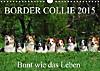 Border Collie 2015 (Wandkalender 2015 DIN A4 quer)