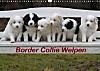 Border Collie Welpen (Wandkalender 2015 DIN A3 quer)