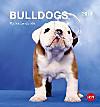 Bulldogs Postkartenkalender 2016