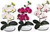 Deko-Orchidee, 3er-Set