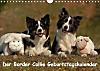 Der Border Collie Geburtstagskalender (Wandkalender immerwährend DIN A4 quer)