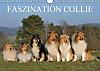 Faszination Collie 2015 (Wandkalender 2015 DIN A4 quer)