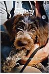 Gipsy - Mein erstes Jahr als Hund (eBook)
