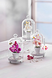 Glasglocken mit Orchidee, 3er Set