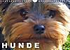 Hunde / Geburtstagskalender (Wandkalender 2015 DIN A4 quer)