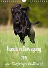 Hunde in Bewegung 2015 von Tierfotografie Bischof (Wandkalender 2015 DIN A4 hoch)