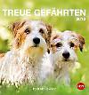 Hunde Postkartenkalender 2016