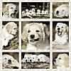 Hundekinder (Puzzle)