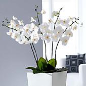 Kunstpflanze Orchidee, weiß, Innendeko
