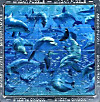 Magna Puzzle (Puzzle), Fun with Dolphins