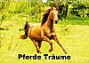 Pferde Träume (Wandkalender 2015 DIN A4 quer)