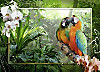 Ravensburger Puzzle Papageien im Dschungel, 1000 Teile