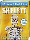 Skelett, m. Modell-Set