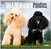 Toy and Miniature Poodles 2015 - Toypudel und Zwergpudel